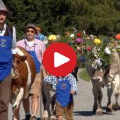 La transumanza in Alto Adige