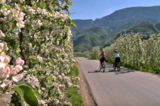 Cycling through the apple blossom