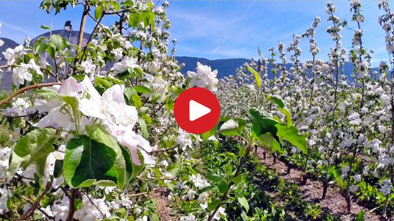 Frühling an der Südtiroler Weinstraße