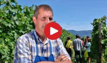 Auf Weinsafari in Südtirol