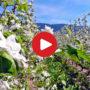 L'area vacanze del lago di Caldaro in filmati: panorami mozzafiato, immagini pittoresche ed idee per le tue vacanze