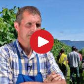 """VinoSafari"" in Alto Adige"