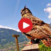Flugschau auf Schloss Tirol
