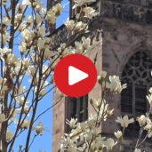 Bolzano - storia e cultura