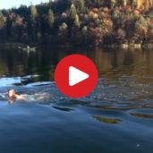 Montiggler Seen in Eppan aus der Luft