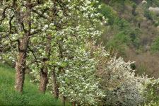 Primavera nel Burgraviato