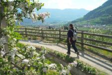 Spring in Lagundo