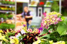 Mercato dei fiori a Lagundo