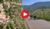 Con l'e-bike tra i meleti in fiore