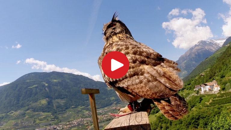 I rapaci di Castel Tirolo