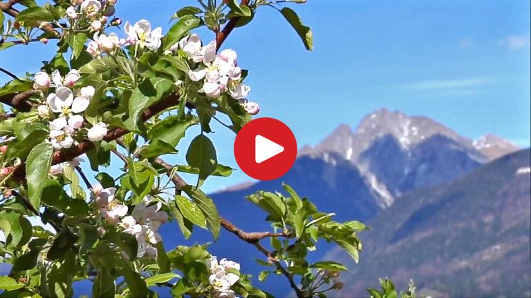 Primavera in Alto Adige