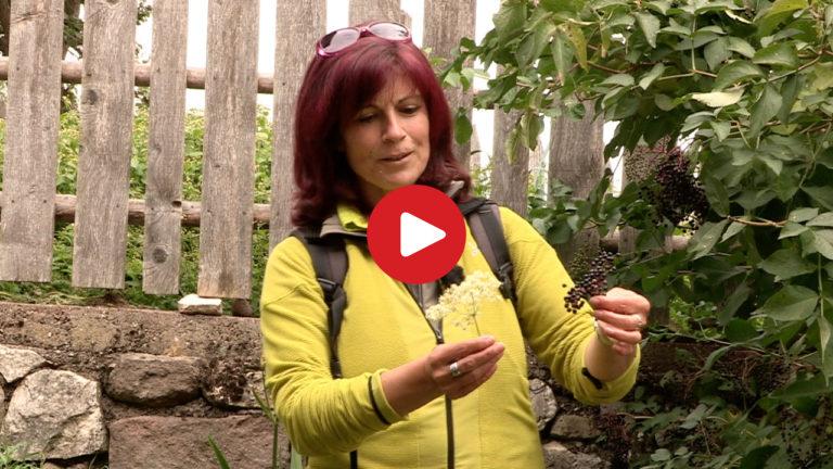 Kräuter- und Wildpflanzen-Wanderung