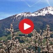 Spring in Venosta Valley