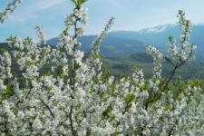 Frühling im Eisacktal