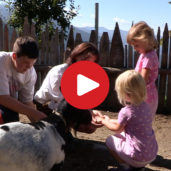 A fun day on a farm for children