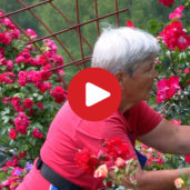 """Rosarium"", il roseto di Bulla"