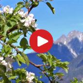 Spring in South Tyrol