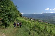 Cortaccia wine trail