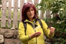 Escursione botanica a Nova Ponente