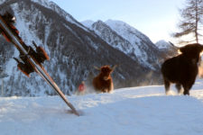 Skigebiet Pejo