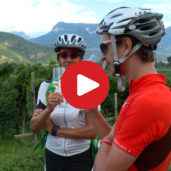 Leisure cycling tour in Termeno