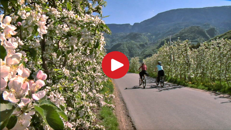Mit dem E-Bike durch die Apfelblüte
