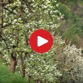Frühling im Burggrafenamt