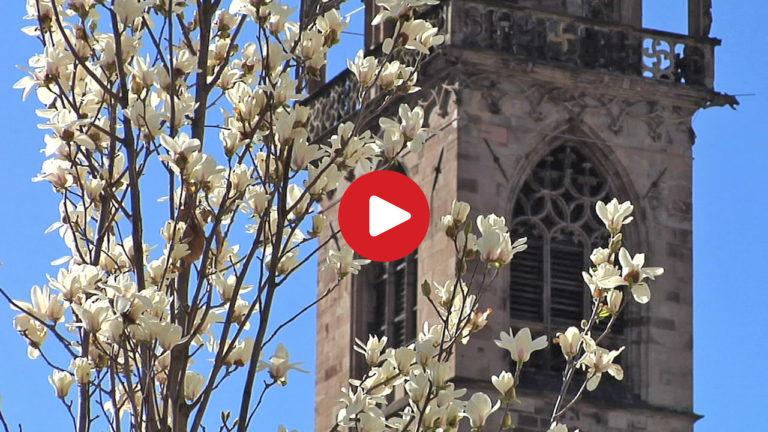 Bozen - Geschichte und Kultur