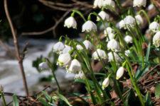 Impressionen aus dem Frühlingstal
