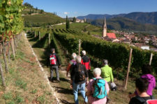 The Wine-Walk Week in Termeno