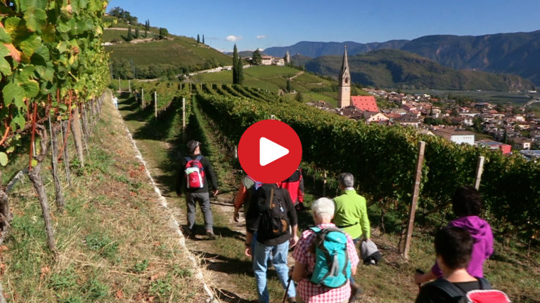 Wine-Walk Week in Termeno