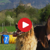 Dog-friendly holidays in South Tyrol