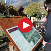 Hiking Tip: Tirolo Wine Trail