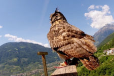 Flight demonstrations at Castel Tirolo